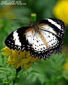 Butterfly photos photos