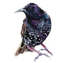 watercolour bird illustration