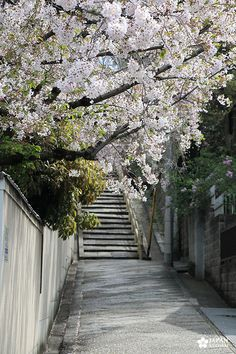 tennoji (6) Osaka, Rue Pietonne, Les Cascades, Sidewalk, Cherry Blossom, Travel Agency, Spring, Sidewalks, Pavement