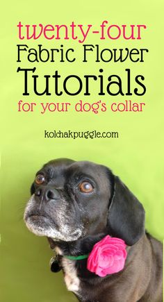 DIY Dog Collar Flower Tutorial