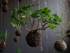 Jardines Flotantes Estas composiciones, realizadas por Fedor van der Valk, consisten en esferas de tierra recubiertas por una red y suspend...