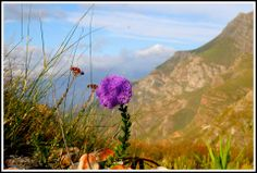 Beautiful vir verby vir my! Natural Beauty, Mountains, Nature, Plants, Travel, Beautiful, Naturaleza, Viajes, Destinations