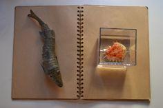 Book by Stephanie Sant on 500px