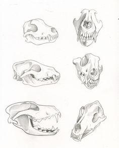 wolf_skull_studies_by_kiraxlee.jpg (800×1001)
