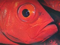 Red fish. Bangkok, Thailand