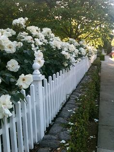 Beautiful white rose hedge along a low fence! I wonder how it looks in Winter. From White Gardens. Fence Landscaping, Backyard Fences, Garden Fencing, Rose Hedge, Pergola, Front Yard Fence, Low Fence, Small Fence, Fence Gate
