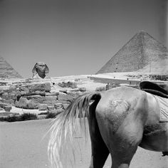 The Sphinx of Giza and the Pyramid of Khufu, 1959. Egypt, Vivian Maier - She sure had a sense of humor :)