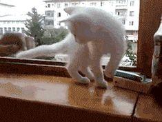 No, Human. You will fall…