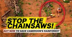 SPEAK OUT!  DEMAND authorities seize ILLEGAL rainforest timber about to leave Cameroon! U.S. Herakles Farms has been EGREGIOUSLY RAPING the Cameroon rainforest without the full authority to do so & despite desperate pleas & resistance from local communities!. Their palm oil project will also DESTROY precious wildlife habitat!  This ATROCITY is all happening with the complicity of the Cameroonian authorities & the European Union!  HELP THE PEOPLE OF CAMEROON FIGHT BACK!  PLZ Sign & Share!
