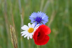 http://www.phoenixamenity.co.uk/store/products/red-white-and-blue-jubilee-wildflower-mix/