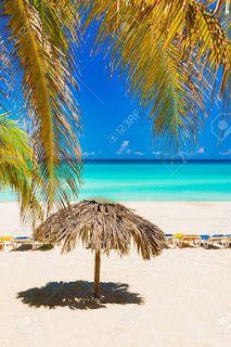 Palm Leaf Beach Umbrella Suppliers Coconut