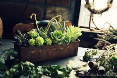 3月の園芸教室見本。。。【多肉植物の寄せ植え】 |フローラのガーデニング・園芸作業日記