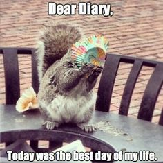 Funny Animal Memes, Animal Quotes, Funny Animal Pictures, Cute Funny Animals, Cute Baby Animals, Funny Cute, Hilarious, Easy Animals, Funny Humor