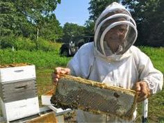 USA Today Article: Beekeeping can supply you and neighbors with honey #honey #farming #beekeeping #bees #news #agriculture #food #pollinate @USATODAY