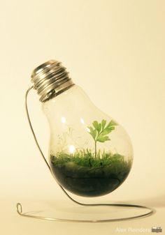 lampara verde