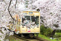 Trenes entre cerezos