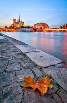 Notre Dame, #Paris
