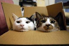 Katzen und Kisten ... eine magische Verbindung, oder?!