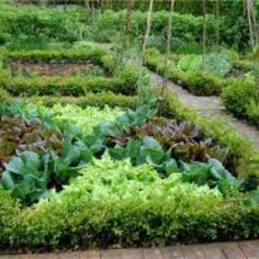 A potager is a French term for an ornamental vegetable or kitchen garden. The historical design precedent is from the Gardens of the French Renaissance and Baroque Garden à la française eras. Often flowers (edible and non-edible) and herbs are planted with the vegetables to enhance the garden's beauty. The goal is to make the function of providing food aesthetically pleasing.