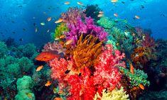 Salvando Arrecifes