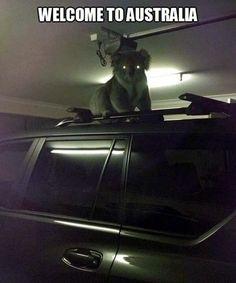 I Hope You Weren't Planning on Leaving! Koala Zombie........