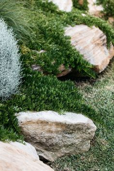 Myoporum parvifolium - A native ground cover plant garden landscaping