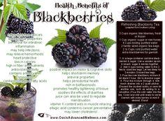 Health Benefits of Blackberries Includes Refreshing Blackberry Tea Recipe! Health Benefits of Blackberries Includes Refreshing Blackberry Tea Recipe! Blackberry Benefits, Blackberry Tea, Blackberry Recipes, Health And Nutrition, Health Tips, Health And Wellness, Benefits Of Berries, Nutritious Snacks, Tips