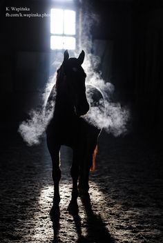 Cold winter morning. #horses #animals