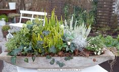 interesting trough garden of greenery, I would change the ivy though. Flower Seeds, Flower Pots, Flowers, Container Plants, Container Gardening, Plant Centerpieces, Small Outdoor Spaces, Little Gardens, Fall Deco