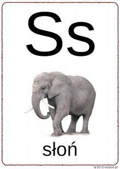 alfabet obrazkowy do wydrukowania - litera s - słoń Polish Language, Elephant, Education, Reading, Animals, Geography, Speech Language Therapy, Animales, Animaux