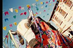 Bumba-meu boi-photo de Padua