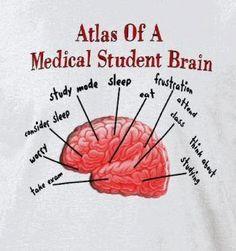 Atlas of a medical student brain #medstudent #anatomy