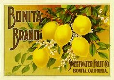 "San Diego ""Bonita Lemon"" Citrus Crate Label"