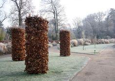 Carpinus betulis / Hornbeam shrubs- Wisley Garden