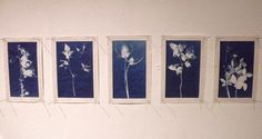 Lynnette Miller. 20 cyanotypes of plants that are believed to protect against evil.