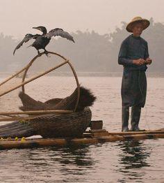 Cormorant Fisherman on the Li River By: GungaJim Downs - Denver Area  .