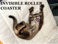 The 17 Best Invisible Cat Pictures