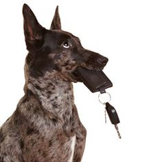 Teach your dog trick about finding and bringing any object. If you lose your keys every time like me, then you should read this article to find step-by-step detailed training tips. It is actually very simple to teach your dogs tricks, but you should have a good knowledge about it. This article tell you everything about this trick, and you will find more tricks in this website too.
