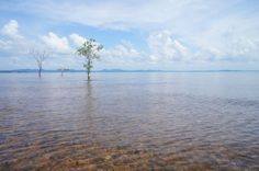 Trees in the sea on Koh Chang's eastern coast