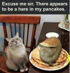 Funny Cat Memes That Never Fail to Make Us LOL - Lovely Animals World Can anything brighten a day quite like a funny cat? These hilarious cat memes are guaranteed to make you crack a smile. Hope you enjoy them and don't forget share to your friends! Funny Animal Memes, Cute Funny Animals, Funny Animal Pictures, Cute Baby Animals, Funny Cute, Cute Cats, Funny Memes, Hilarious, Animal Humor