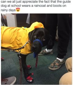 And this one who is always just dressed appropriately. | 17 Photos That Prove The World Simply Isn't Worthy Of Service Dogs
