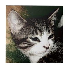 Thoughtful Kitten Ceramic Tiles!  #kitten #zazzle #store #gift #present #customize #cute #meow #fuzzy http://www.zazzle.com/conquestkitty*