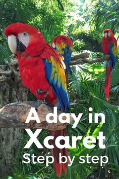 Have you ever wonder how paradise looks like? Well, maybe you should stop wondering and just go to Xcaret in Mexico, to see it for yourself.