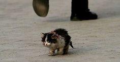 Niemand wollte diese Katze berühren. Als ein Mann es endlich tat, geschah etwas Wunderbares.