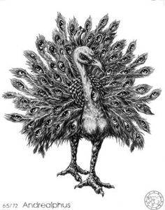 (65) ANDREALPHUS (Goetic demon) influences those  born 23/05 - 04/08 - 16/10 - 28/12 - 11/03. The Sixty-fifth Spirit is Andrealphus. He is a Mighty Marquis, appearing at first in the form of a Peacock, with great Noises. But after a time he putteth on Human shape. He can teach Geometry perfectly. He maketh Men very subtle therein; and in all Things pertaining unto Mensuration or Astronomy. He can transform a Man into the Likeness of a Bird. He governeth 30 Legions of Infernal Spirits.