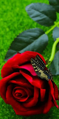 Beautiful Red Roses, Beautiful Gif, Beautiful Butterflies, Flowers Gif, Flowers Nature, Photoshop Photography, Nature Photography, Rosas Gif, Beau Gif