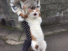 プードル, ヨークシャーテリア, かわいい動物, キュートな猫, おもしろネコちゃん,