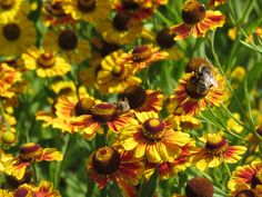 Learn how to attract pollinators to your garden with help from the new book, Pollinator Friendly Gardening. It contains very helpful information.