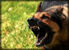 Contact the experienced New Jersey dog bite lawyer at Beninato & Matrafajlo, We will fight to get you the legal Help & the maximum compensation you deserve.