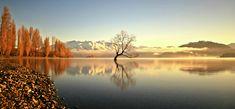 jomy jose photographer jomy jose hannahsdreamz hannahsdreamz photographer new zealand photographer portrait photographer Lone Tree, Beautiful Landscapes, Portrait Photographers, Lonely, New Zealand, River, Photography, Outdoor, Outdoors